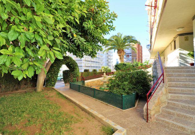 Apartamento en Benidorm - Piscis 12-8