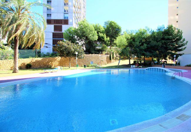 Apartment in Benidorm - Gemelos 15-15-D