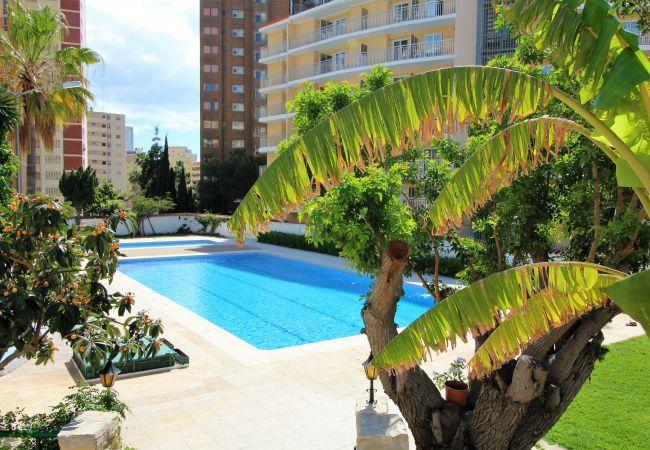 Apartment in Benidorm - Girasol 54